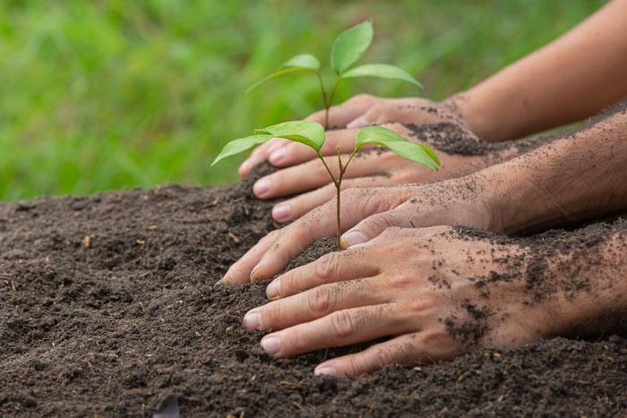 manos plantando dos plantas